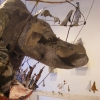 13-pano-au-rhinodscf8588