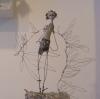 18-ailes-du-peredscf8759